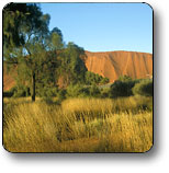 Uluru - Kata Tjuta National Park - Accommodation Guide