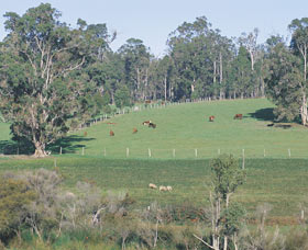 Scenic Drives - Bunbury Collie Donnybrook - Accommodation Guide