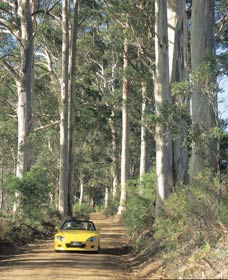 Mount Shadforth Scenic Drive - Accommodation Guide