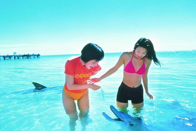 Monkey Mia Dolphins  Shark Bay Air Tour From Perth - Accommodation Guide