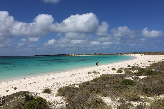 Abrolhos Island Half Day Fly and Flipper - Accommodation Guide